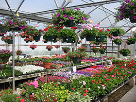 Garden and nursery thenurseries Telly s greenhouse and garden center
